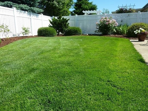 Grass after Espoma Organic Lawn Starter Seed and Sod Food Fertilizer.